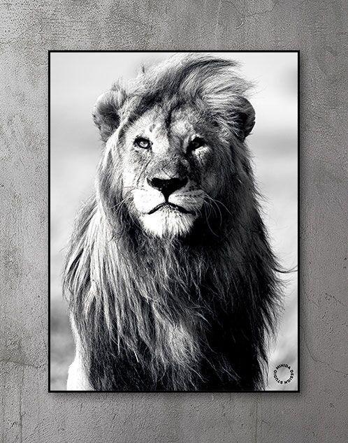 Plakater med dyr