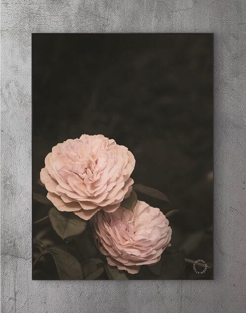 Billige Plakater Online - Two Roses