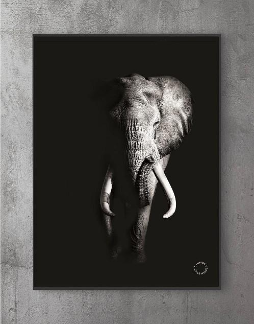 Moderne plakater online