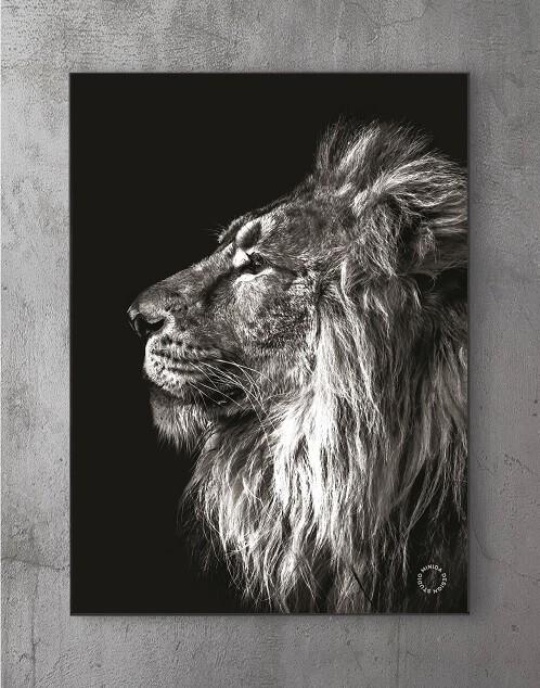 Moderne Plakater Online - Lion II