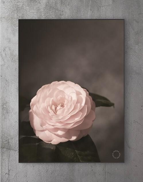 Billige plakater online - rose