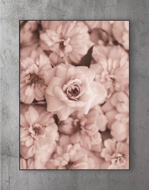 Billige plakater online - roses