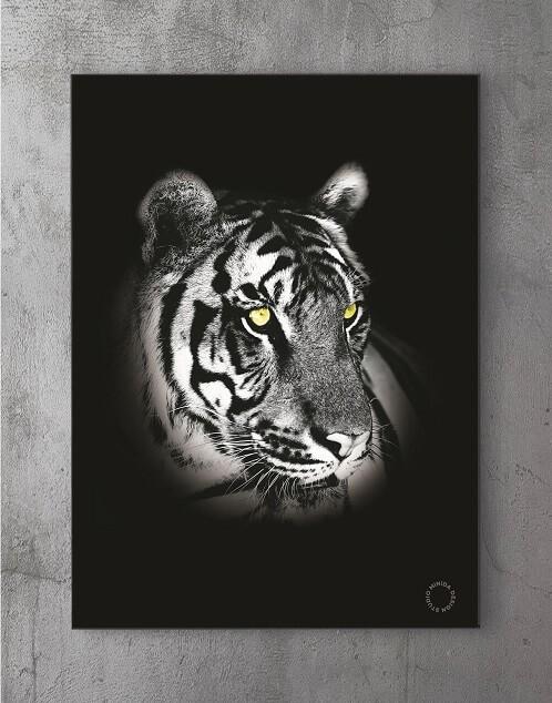 Moderne Plakater Online - Y Tiger