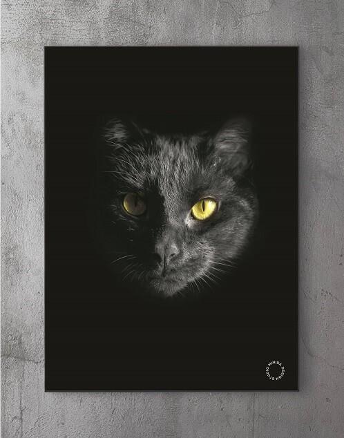 Modene plakater online - Black Cat Y