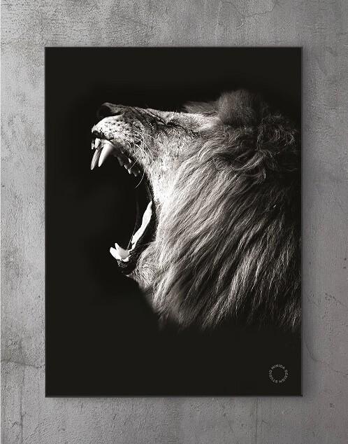 Moderne Plakater Online - Lion