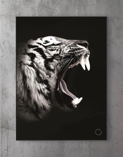 Moderne Plakater Online - Tiger