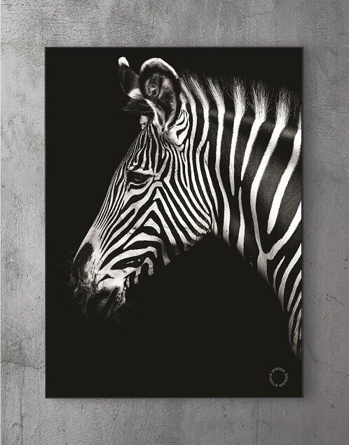 Modene plakater online - Z