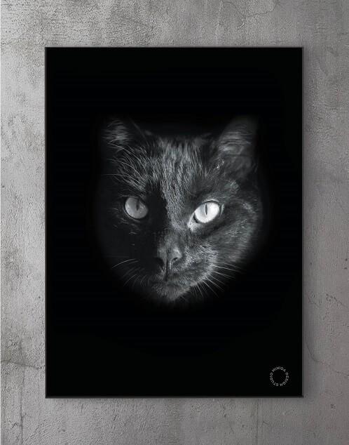 Modene plakater online - Black Cat