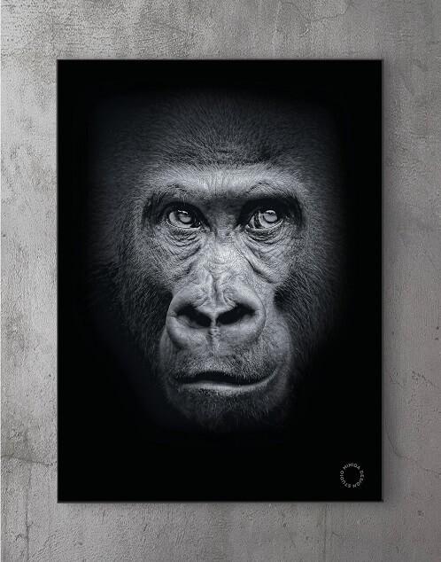 Modene plakater online - Gorilla