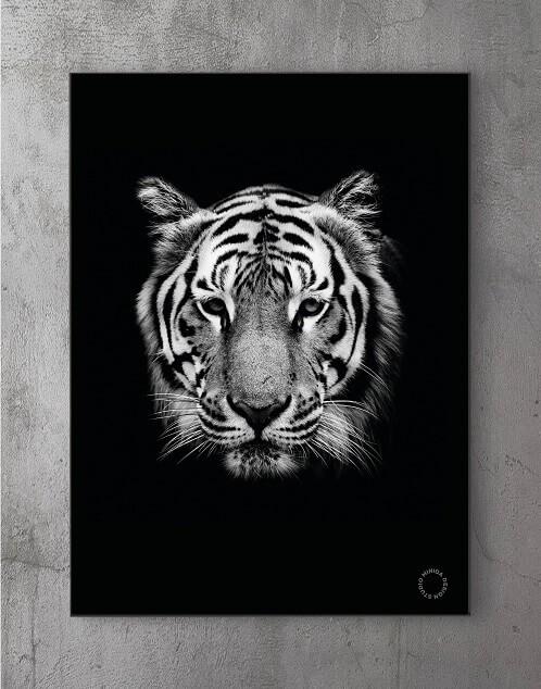 Modene plakater online - Tiger!