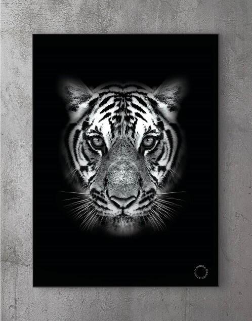 Modene plakater online - Predator