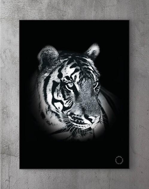 Modene plakater online - Dark Tiger