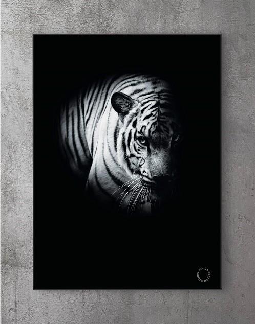 Moderne Plakater Online - fading tiger